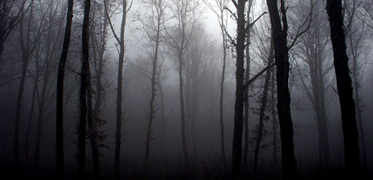 Gray_Forest_BookCover_web