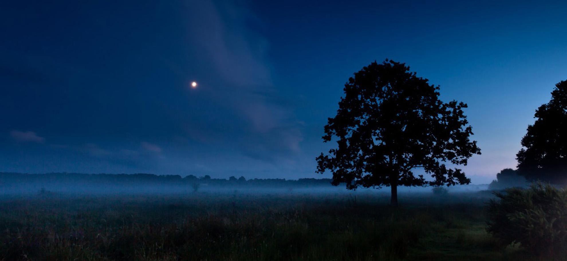 Night_Sky_web