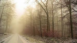 autumn-road-fog