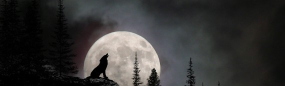 The Way of the Wolf…..cont'd….part two